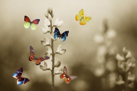 Una mariposa de color rojo en el campo de mal humor flores color sepia. Foto de archivo - 11696687