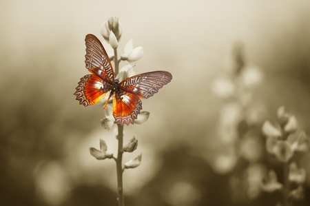 butterfly flower: A red butterfly in the moody sepia flowers field.