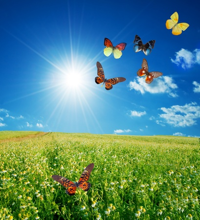 Butterfly spring field. A group o colorful butterflies in the spring summer grass land photo