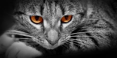 supernatural power: Cat with mysterious scary red glowing eyes Stock Photo