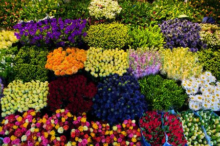 florist shop: Colorful flowers in a florists. Gardening, spring, nature background