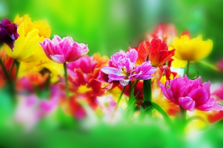 Colorful fresh flowers in a sunny green spring garden Stock Photo - 13718141