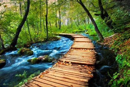 深い森のストリーム。透明な水。プリトヴィッツェ湖群、クロアチア