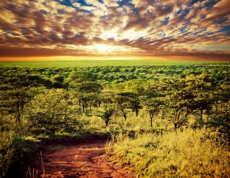africa sunset: Serengeti savana paesaggio con strada al tramonto in Tanzania, Africa.