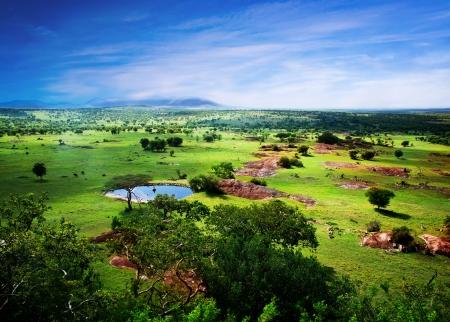 Savanna in voller Blüte, in Tansania, Afrika Panorama. Serengeti