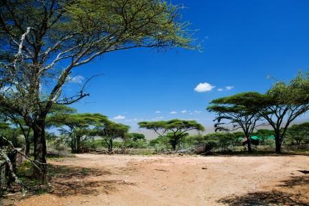 africa sunset: Savanna landscape, acacia trees in Africa, Serengeti, Tanzania.