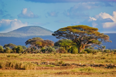 Savanna landschap en de flora in Afrika, Amboseli, Kenia Stockfoto