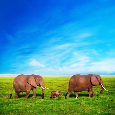 Elefantes en la sabana africana familia. Safari en Amboseli, Kenia, África Foto de archivo