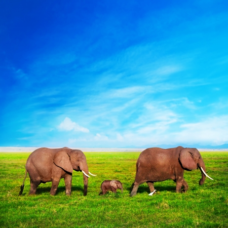 Elephants family on African savanna. Safari in Amboseli, Kenya, Africa photo