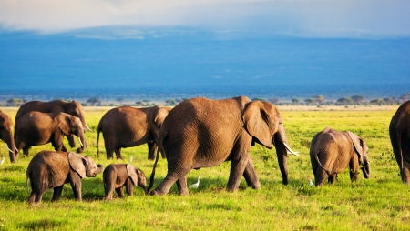 Elephants family and herd on African savanna. Safari in Amboseli, Kenya, Africa photo