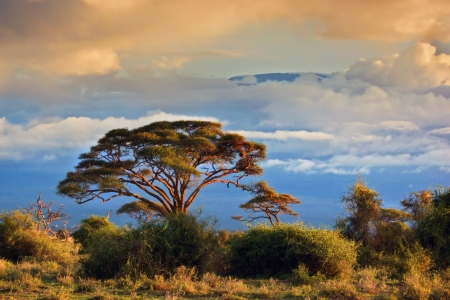 tanzania: Mount Kilimanjaro partly in clouds at sunset, view from savanna landscape in Amboseli, Kenya, Africa