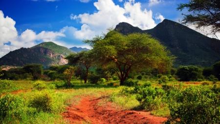 Red Boden Straße und Busch mit Savanne Panorama Landschaft in Afrika. Tsavo West, Kenia.