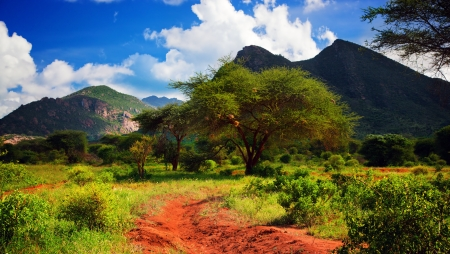southern: Red ground road and bush with savanna panorama landscape in Africa. Tsavo West, Kenya.