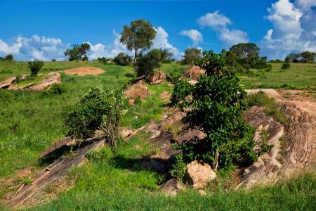tsavo: Grassland with rocks, savanna landscape in Africa. Tsavo West, Kenya.