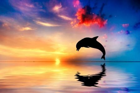 """delfin: PiÄ™kny spokojny ocean na zachód sÅ'oÅ""""ca. Dolphin sylwetka skoków Zdjęcie Seryjne"""