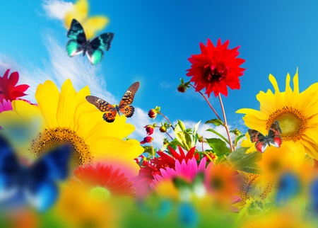 Sunny garden of flowers and butterflies. Colors of spring and summer photo
