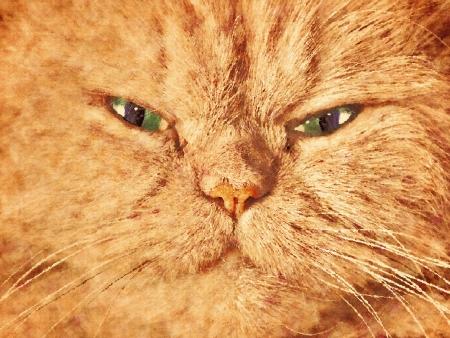 primer plano cara: La cara del gato lindo cerca retrato. Pintado sobre lienzo efecto Foto de archivo