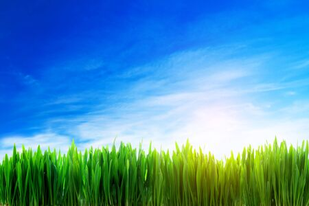 Perfect nature landscape background. Fresh grass field on a sunny day with blue sky photo