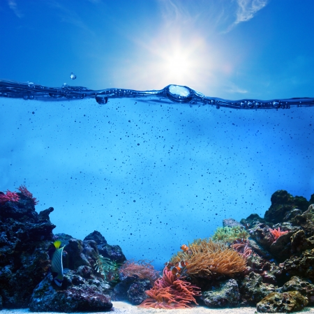 Underwater scene. Coral reef, blue sunny sky shining through clean water. Space underwater for you to fill or just use standalone. High resolution photo