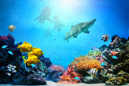 Underwater scene. Coral reef, colorful fish groups, sharks and sunny sky shining through clean ocean water. High resolution photo