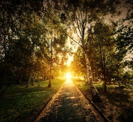 aura sun: Autumn, fall park. Wooden path towards the sun. Colorful leaves, romantic aura of mystery