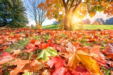 Autumn, fall landscape in park. Colorful leaves, sunny blue sky. photo