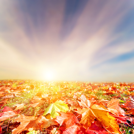fall landscape: Autumn, fall landscape. Colorful leaves, sunset sunny sky. Perfect for background Stock Photo