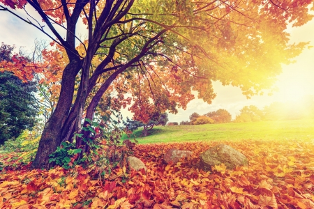 Autumn, Fall Landscape In Park. Colorful Leaves, Sun Shining Through Tree  Photo