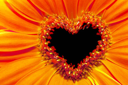 stamens: Flower close up with a heart shaped stamens section  Love, Valentine Stock Photo