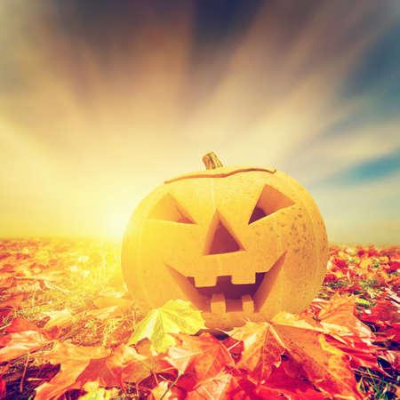 jack o lantern: Halloween pumpkin in fall, autumn leaves. Hand carved jack o Stock Photo