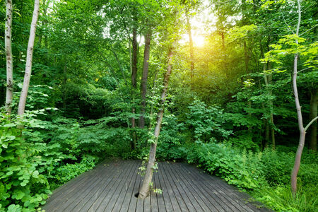 spa relax: Wooden floor in a green forest. Concepts of spa, relax, wellness, nature etc.