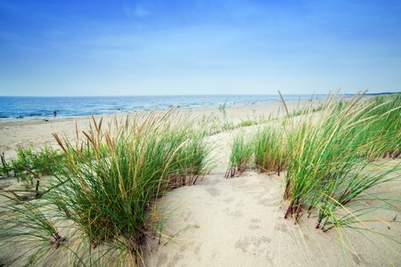 Calm beach with dunes and green grass. Ocean in the background, blue sunny sky.
