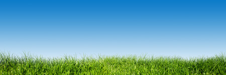 Green grass on blue clear sky, spring nature theme. Panorama or banner. Super high resolution, premium quality.