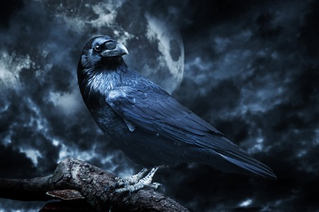 Black raven in moonlight perched on tree. Scary, creepy, gothic setting. Cloudy night with full moon. Halloween
