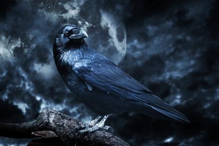Czarny kruk w świetle księżyca siedzący na drzewie. Straszne, straszne, gothic ustawienie. Zachmurzenie nocy z pełni księżyca. Halloween
