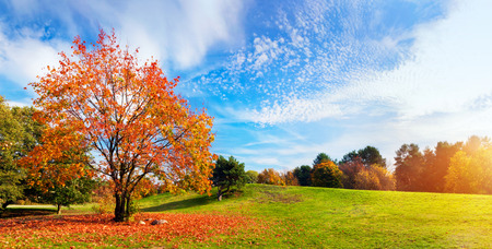 Autumn, fall landscape with a tree full of colorful, falling leaves, sunny blue sky. Wide perspective, panorama. Perfect seasonal theme. Stock Photo