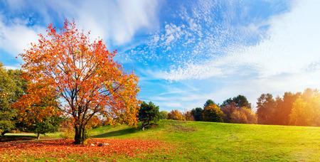 Herfst, herfst landschap met een boom vol kleurrijke, vallende bladeren, zonnige blauwe hemel. Breed perspectief, panorama. Perfect seizoensgebonden thema.