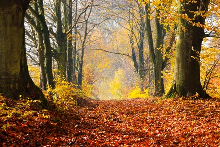 autumn path: Autumn, fall forest. Natural path towards light of afternoon sun. Red leaves, romantic mood.