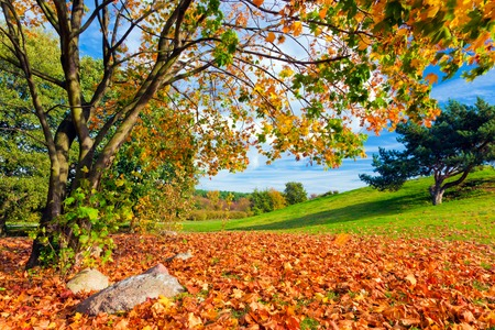 fall landscape: Autumn, fall landscape with a tree full of colorful, falling leaves, Green hill in the background.