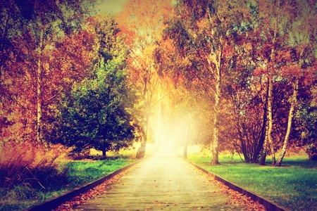 秋, 秋の公園。太陽に向かって木製のパス。カラフルな葉、ロマンチックなオーラ、新生活、ホープ、天国への道の概念。 写真素材