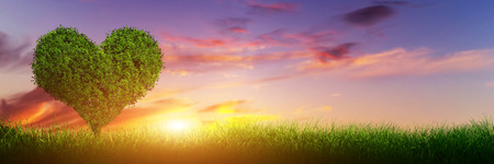 Heart shape tree on green grass field landscape at sunset. Panorama, banner. Love symbol, concept for Valentines Day, wedding etc. photo