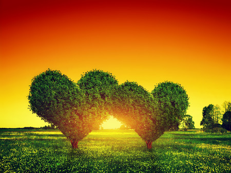 Heart shape trees couple on green grass field landscape at sunset. Love symbol, concept for Valentines Day, wedding etc. photo