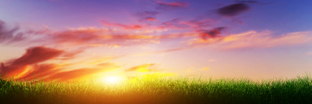 Green grass on sunset sunny sky, nature theme. Panorama or banner photo