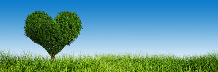 Heart shape tree on green grass field landscape. Panorama, banner. Love symbol, concept for Valentines Day, wedding etc. photo