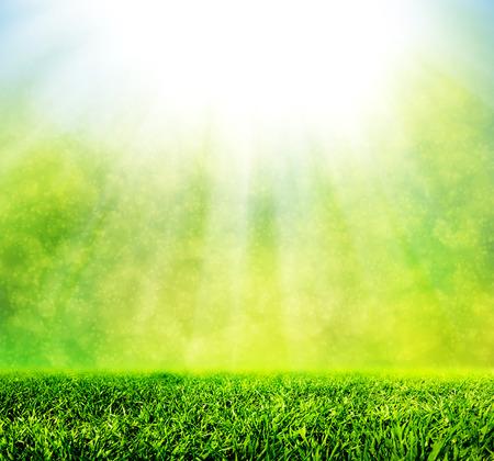 grassy field: Green spring grass against natural nature blur.