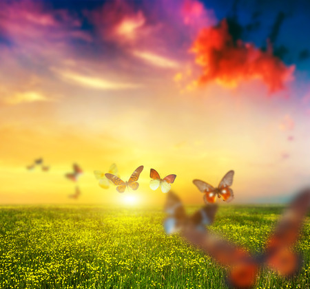 Colorful butterflies flying over spring meadow with flowers.