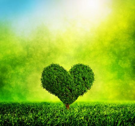 Hartvormige boom groeit op groen gras.