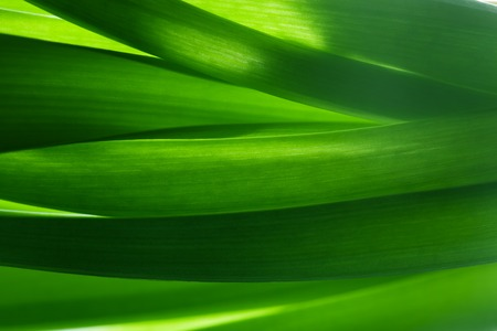 nature wallpaper: Green grass, plants background in backlight. Fresh, nature, nature composition. Stock Photo
