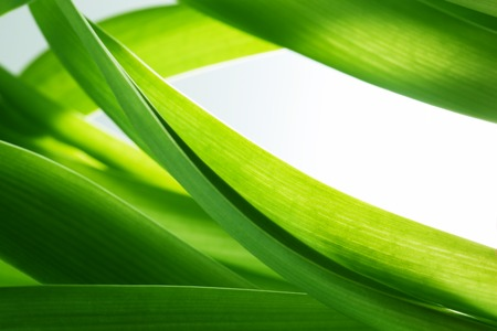 Green grass, plants background with white copy-space. Fresh, nature, nature composition.