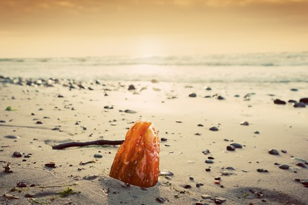 amber light: Amber stone on the beach. Precious gem, treasure concept. Baltic Sea, Poland.
